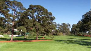 Eike's Tree image at August National Golf Club