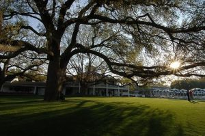 image of the big oak tree in front of the clubhouse at Augusta National - Home of the Masters golf championship